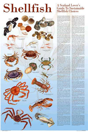 Seafood Poster and Guide To Sustainable Shellfish