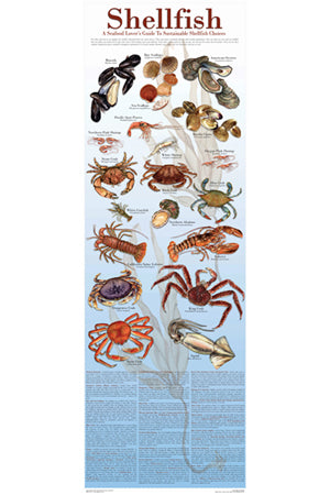 Seafood Poster and Guide To Sustainable Shellfish 12x36