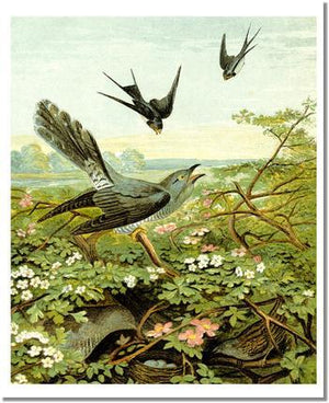Victorian Print: Swallows