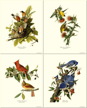 Vintage Audubon Bird Art Print Set
