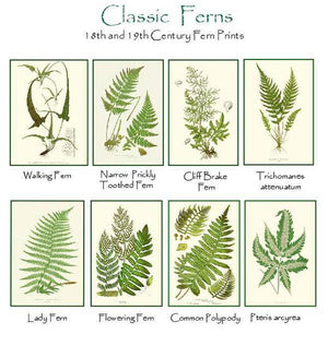 Antique Fern Notecards
