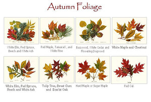 Autumn Foliage Notecards