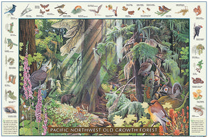 Pacific Old Growth Forest Poster Identification Chart