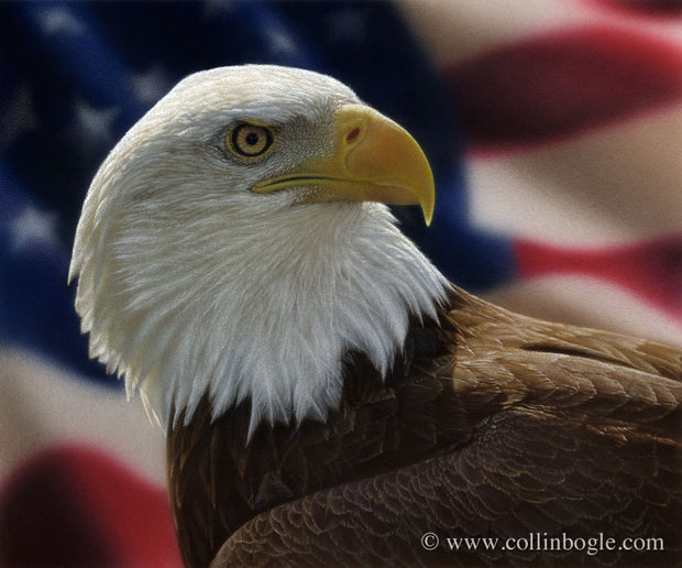 American bald eagle painting art print by Collin Bogle.