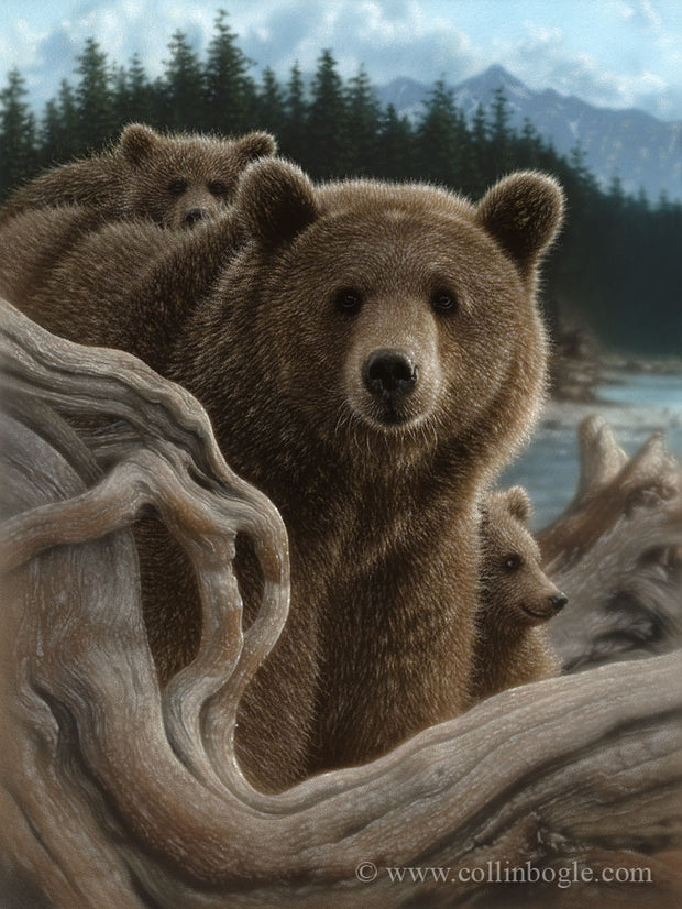 Brown bear mother and cubs painting art print by Collin Bogle.