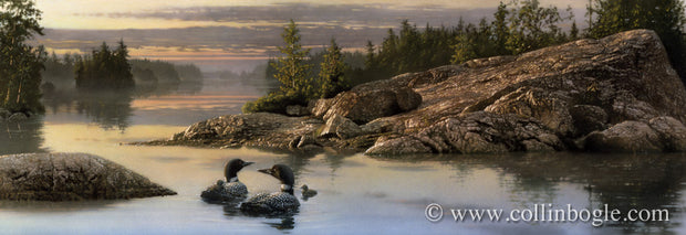 Loons in boundary waters painting art print by Collin Bogle.