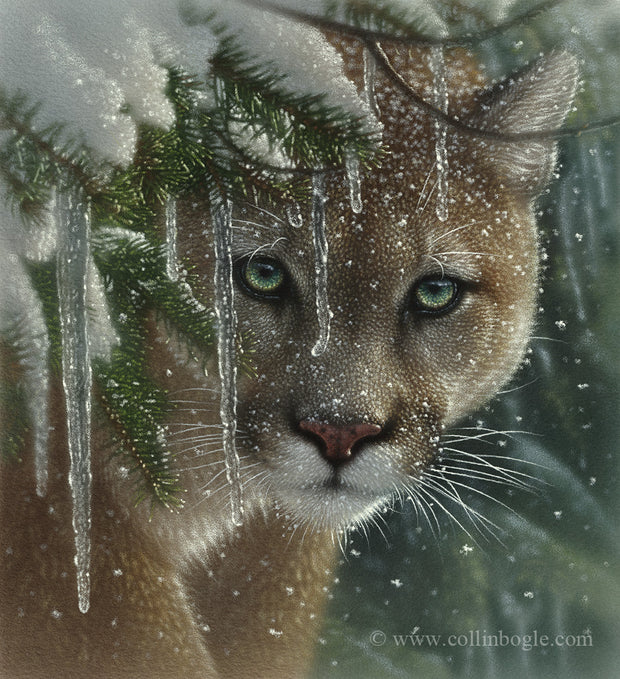 Cougar in ice and snow covered branches painting art print.