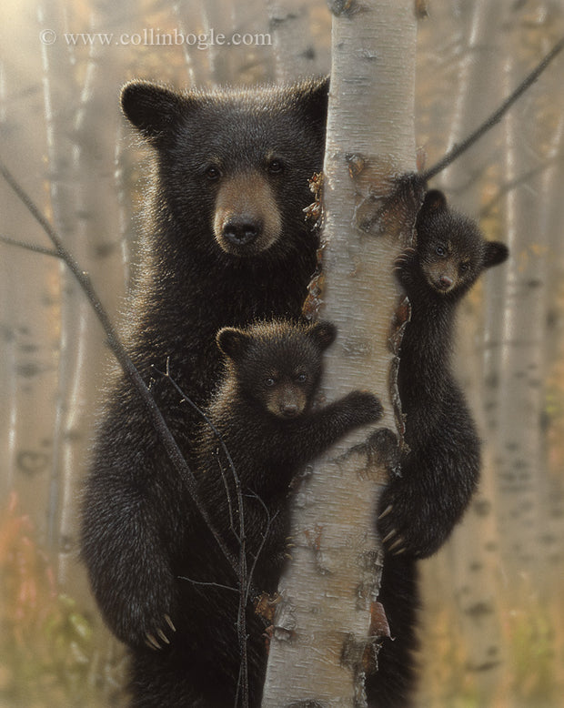 Black bear mother and cubs painting art print by Collin Bogle.