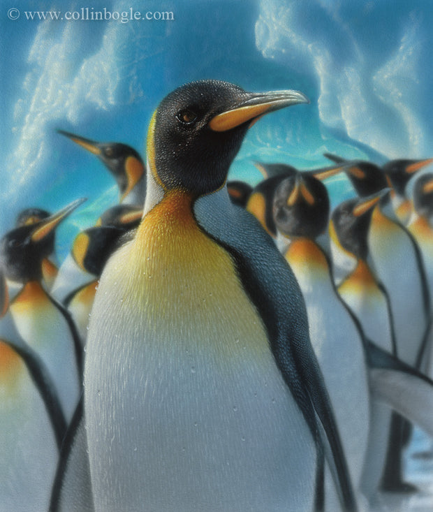 King penguins with ice bergs painting art print by Collin Bogle.