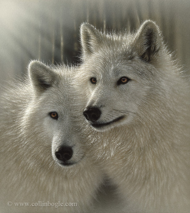A pair of white wolves painting art print by Collin Bogle.