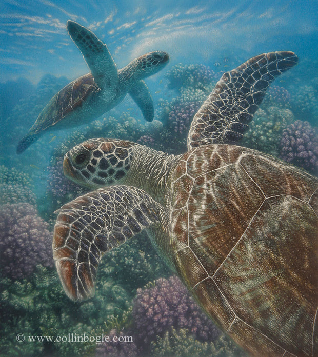 Sea turtles swimming with coral painting art print.