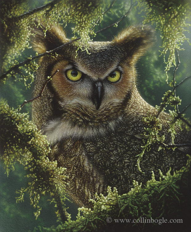 Great horned owl in moss covered branches.