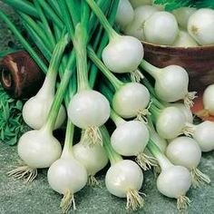200 Pcs White Sweet Spanish Onion Seeds - AsitiGift