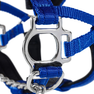 Dog Head Collar Blue (with chain)