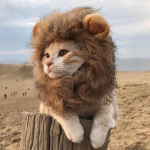 Lion Mane Wig For Cats