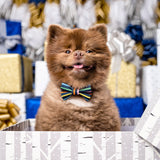 Bertie Bert the Pom Holiday Card