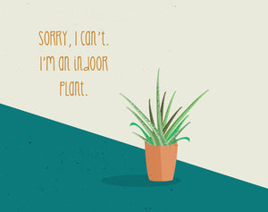 Sorry, I can't. I'm an indoor plant