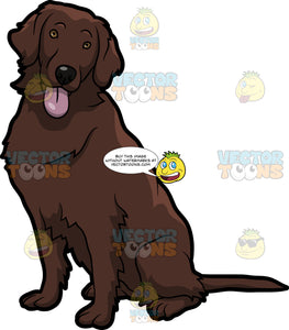 An Adorable Flat Coated Retriever Dog