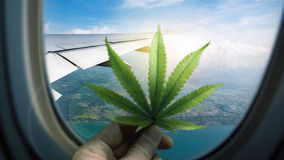 TSA Allows Hemp-Derived CBD on Planes