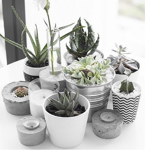 Watering succulent plants the proper way- Succulent Plants Care Tips