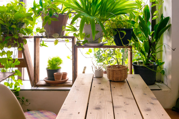 Best Plants to Keep Indoor