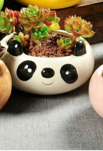 Panda Face Bowl Pot/Planter with Plant - QYARI