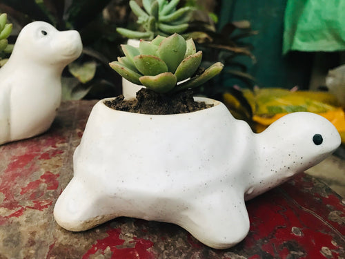 Turtle Shape Planter (small) with Plant - QYARI