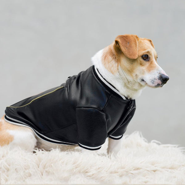 Little Though guy Jacket ud83dudc36 Dog Clothes PUGYOU