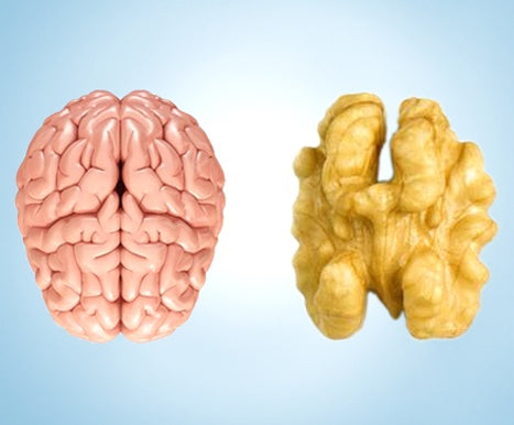 Rich in omega 3, walnuts are one of the most nutritious and healthy food for brain health