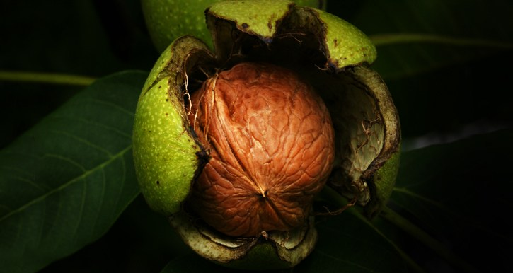 Kashmiri walnuts are organic and naturally grown without the use of any fertilizers and chemicals.