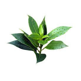 Angel's Mist Tea Tree Essential Oil