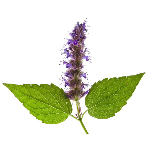 Angel's Mist Patchouli Essential Oil