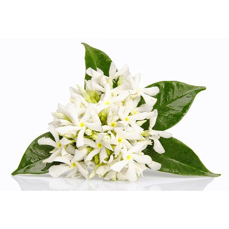 Angel's Mist Neroli Essential Oil