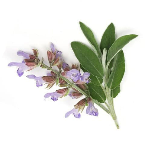 Angel's Mist Clary Sage Essential Oil