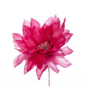 Cerise Feather Dahlia