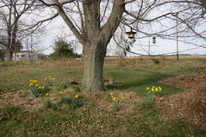 Early Spring Around the Schoolhouse