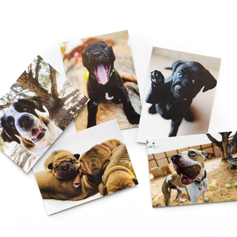 Best Friends Dogs Card Set