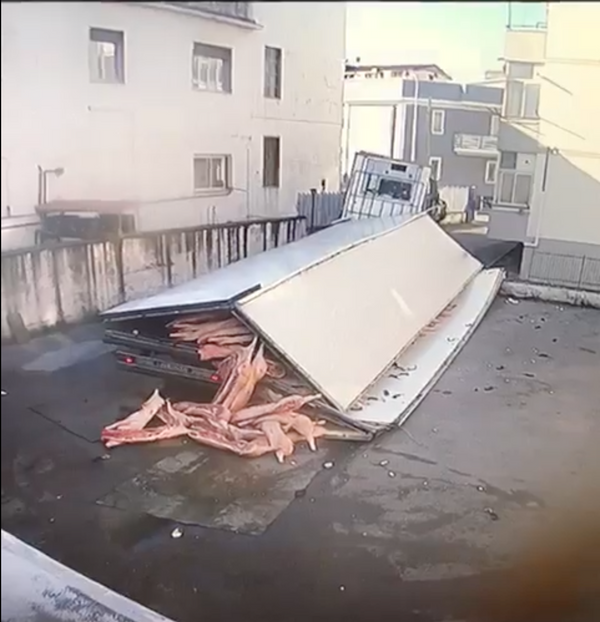 Semi Truck FULL OF PIGS COLLAPSES!