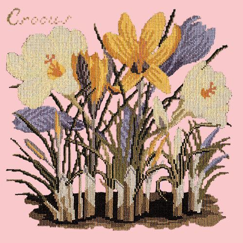 Crocus Needlepoint Kit Elizabeth Bradley Design Pale Rose