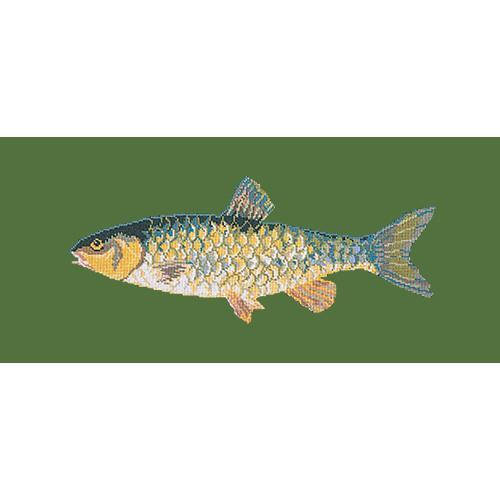Freshwater Chub Needlepoint Kit Elizabeth Bradley Design Dark Green