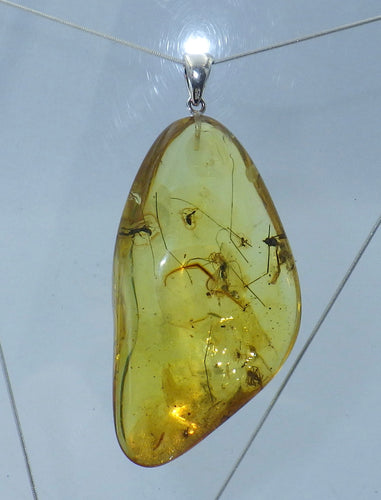 Large Insect in Baltic Amber Silver Pendant | Earthfound.co.uk