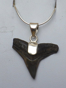 Fossil Shark Tooth Silver Pendant |Earthfound.co.uk