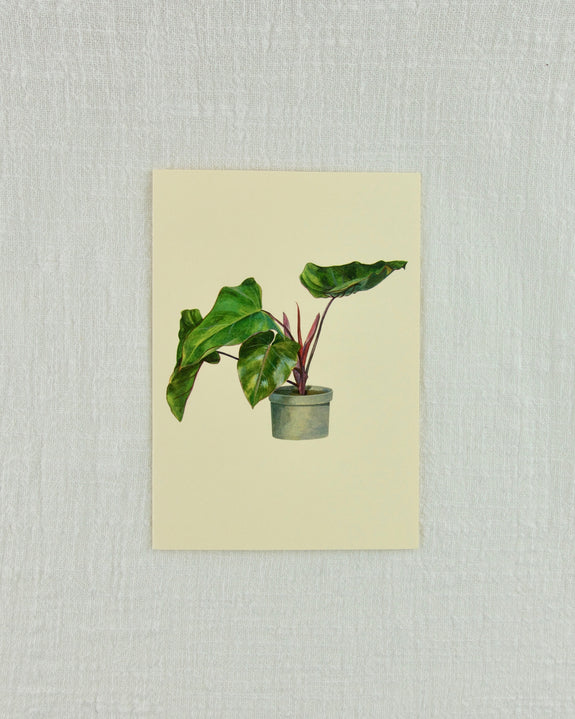 Pot Plant Greeting Card