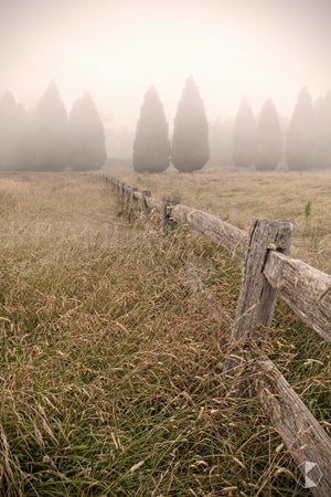 Conifer Fence, Southern Highlands, NSW