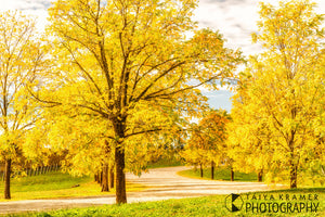 Yellow Tree Road, Southern Highlands