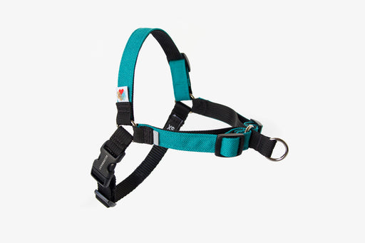 Linden No Pull Dog Harness / Turquoise