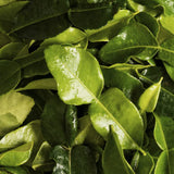 Kaffir Leaves (makrut), Organic and Biodynamic (Fresh Frozen)