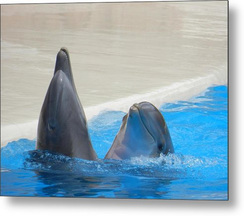 When Dolphins Dance - Metal Print