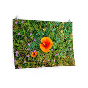 Premium Matte Poster Two Poppies Poster
