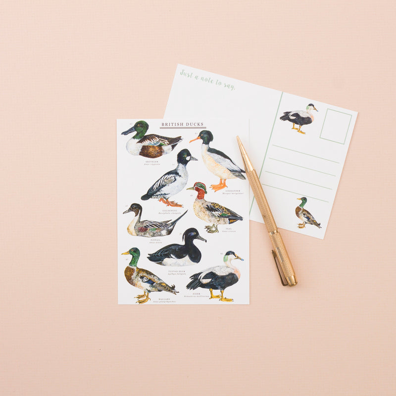 British Ducks A6 Postcard